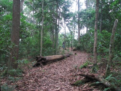 Bosque Humedo Tropical!!!