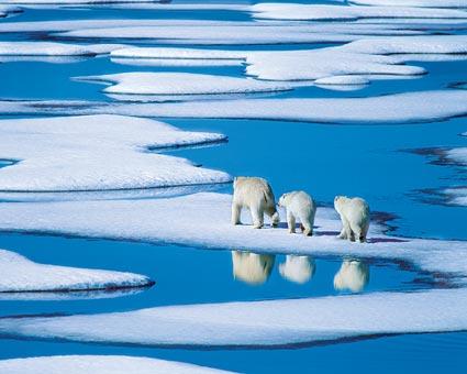 L'amincissement de la glace précipite les cycles de vie en Arctique